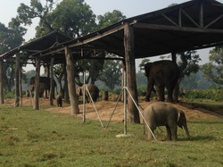 チトワンの象繁殖センター