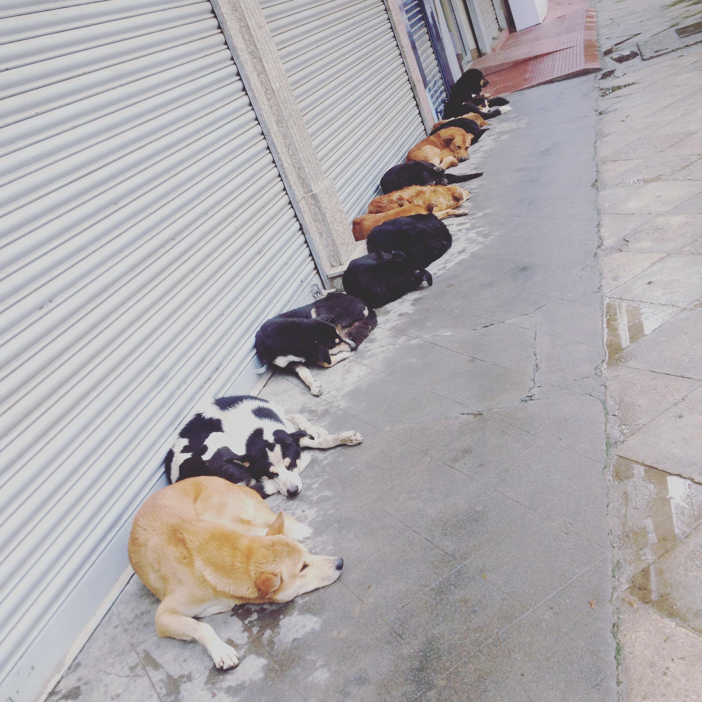 王宮通りの犬たち