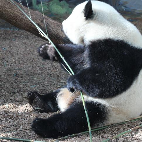 Behind the scenes, Zoo Atlanta