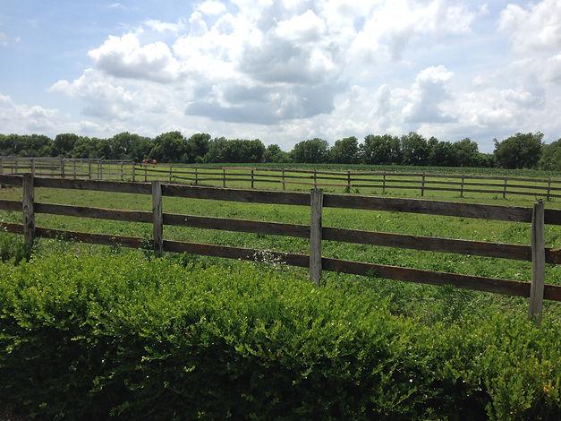 Pasture Fence Line.JPG
