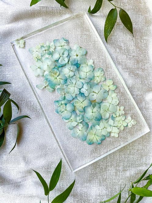 Hand pressed blue hydrangeas in acrylic
