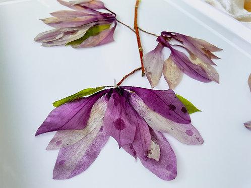 Japanese Magnolias in white acrylic tray