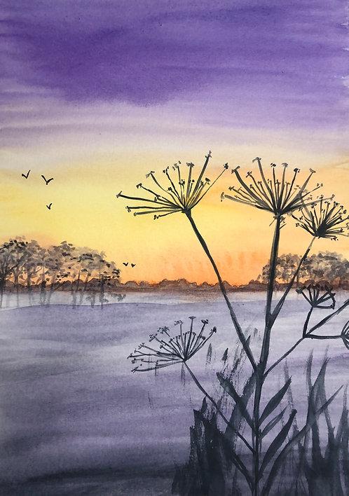 Seedheads at Sunset