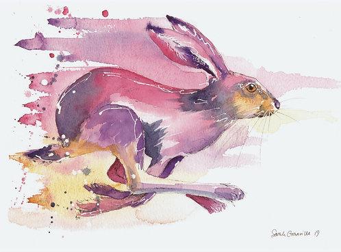 Running Pink Hare