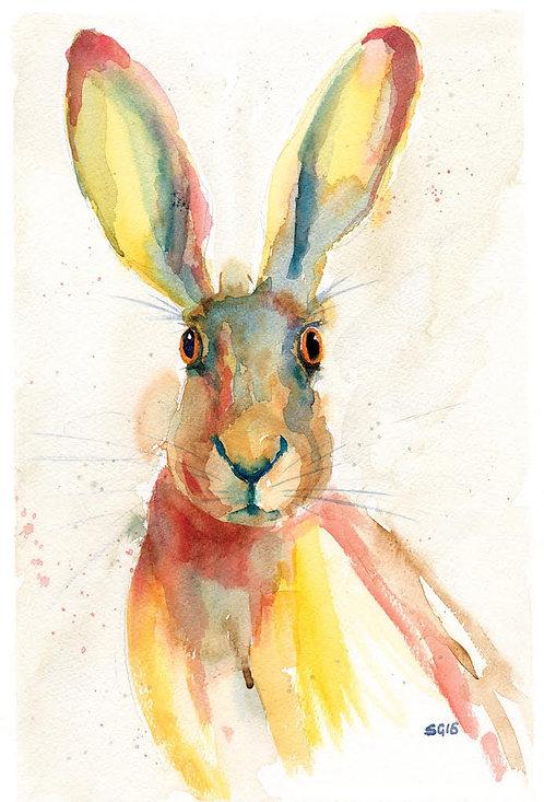 Staring Hare