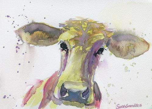 Amberley Cow
