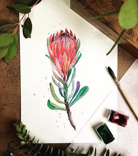 Protea (Framed)