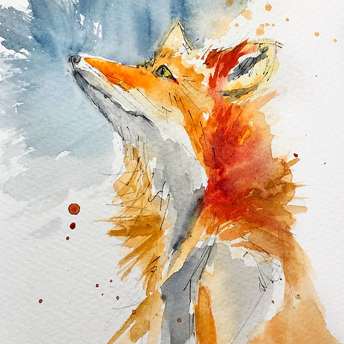 Stargazing Fox