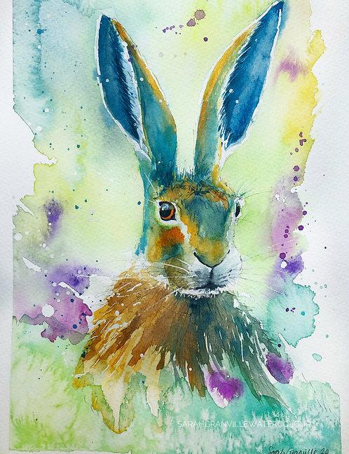 Blue Eared Hare