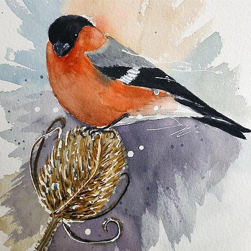 Bullfinch (Framed)