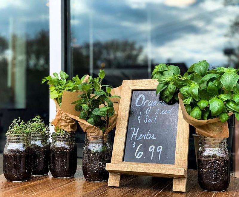 organic plants for sale outside of Botanical Vegan Cafe