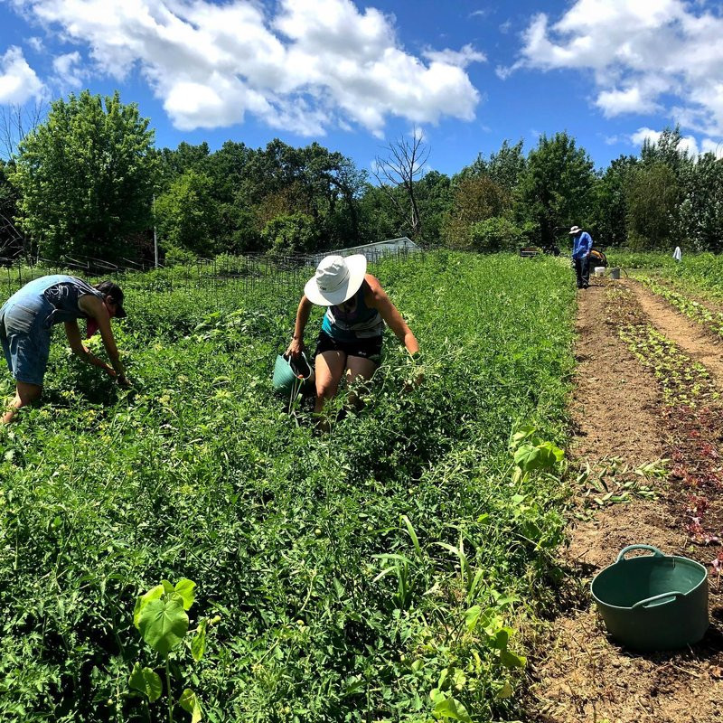 employees at Cherry Valley Organics work in the fields