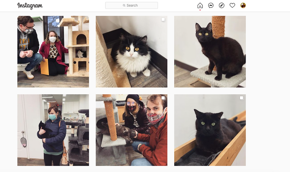 The instagram grid of Black Cat Market, showing photos of cats and owners
