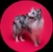 dog-01-web.png