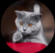 cat-01-web.png