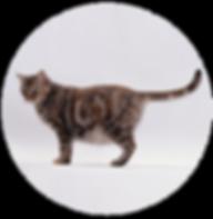 gato-prenha-01.png