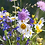 Thumbnail: Whimsical Wildflower Wishes