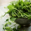 Grow your own microgreen pea shoots - super healthy superfood