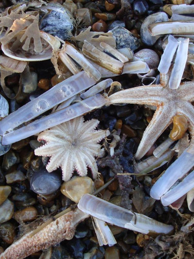 Shells on the Cley shore