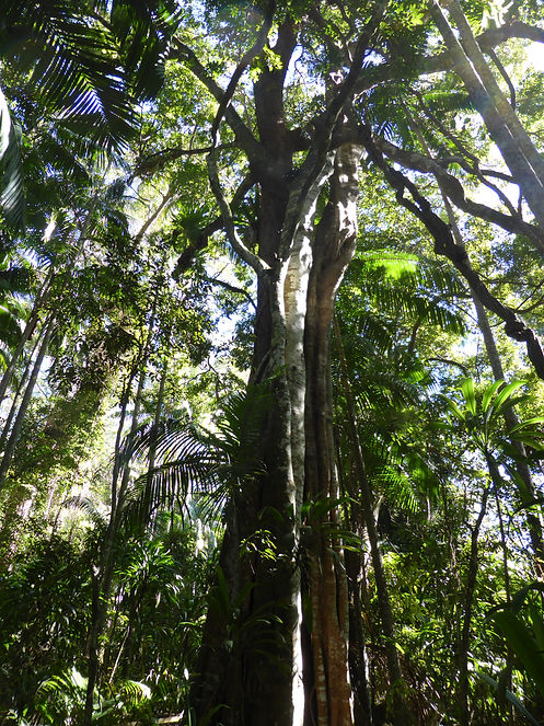 Save the planet rainforest