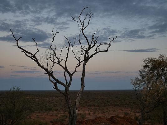 Outback lightning tree