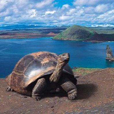 Tortuga Gigante de Galápagos TM 10ml