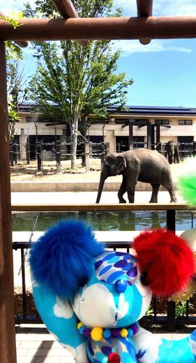 象さんとお友達