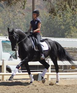 wesley Dressage Horses