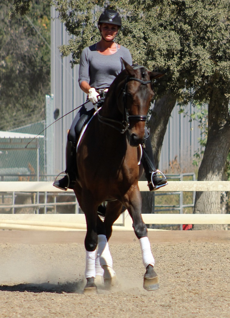 Dressage Horse Sales in California