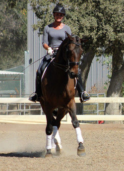 Dressage Horse Sales in California