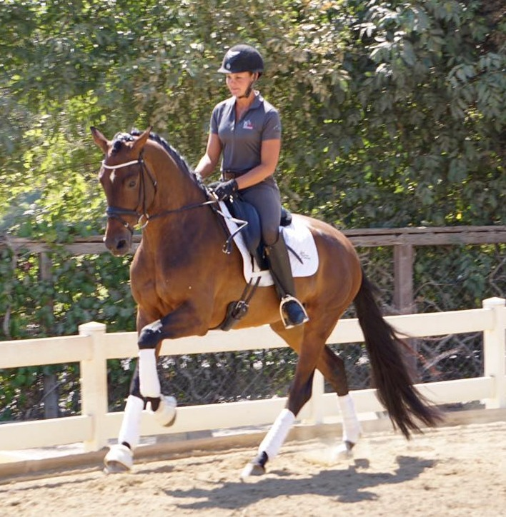horatio dressage horses california