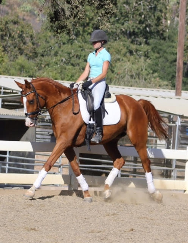 rio - Dressage Horse Sales Californi