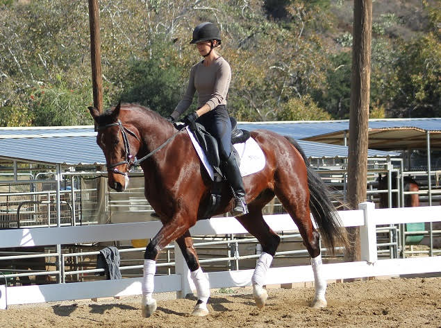 Dressage Horses California
