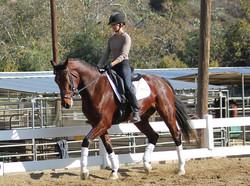 Dressage Horses California
