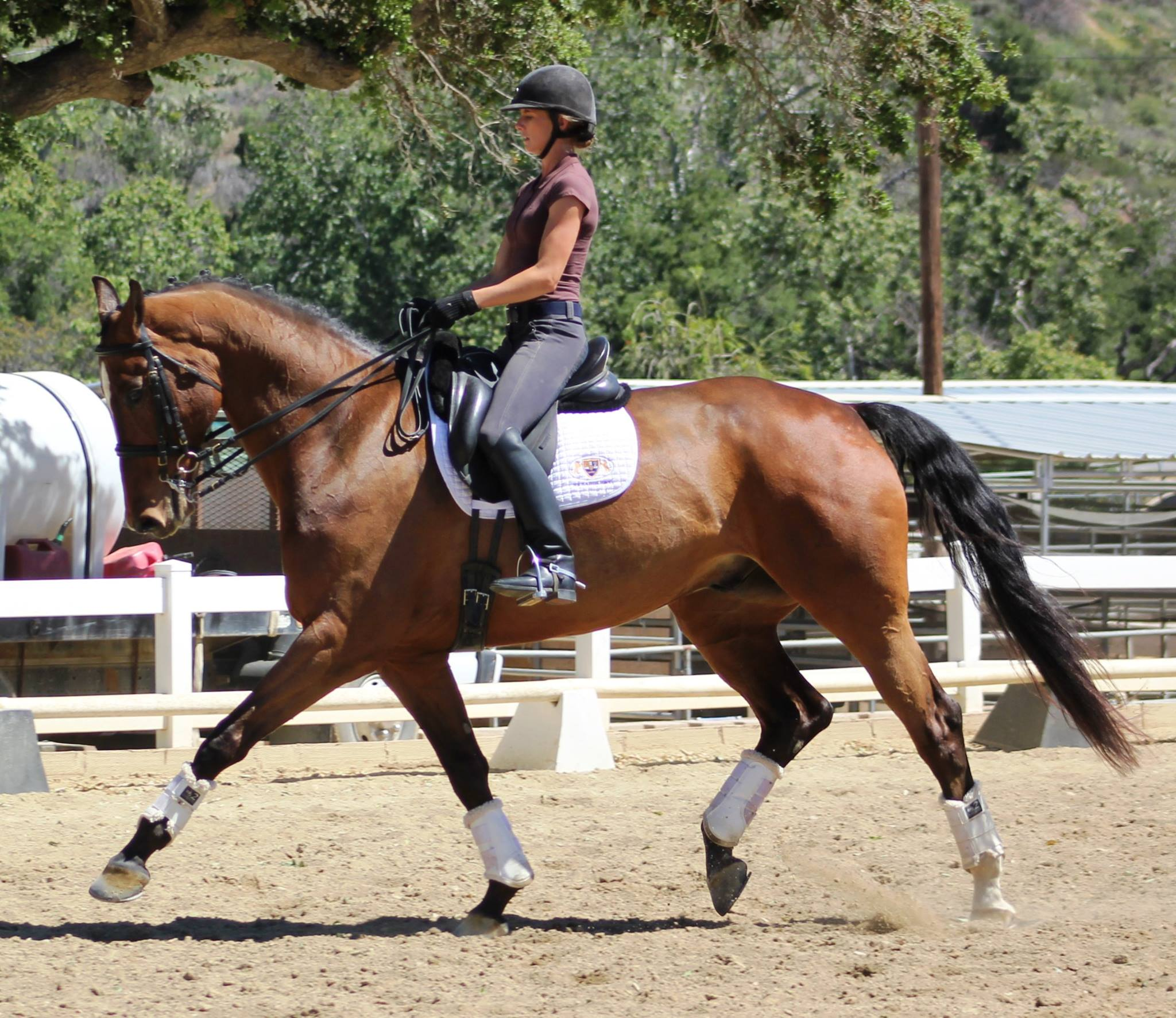 Banner California Dressage
