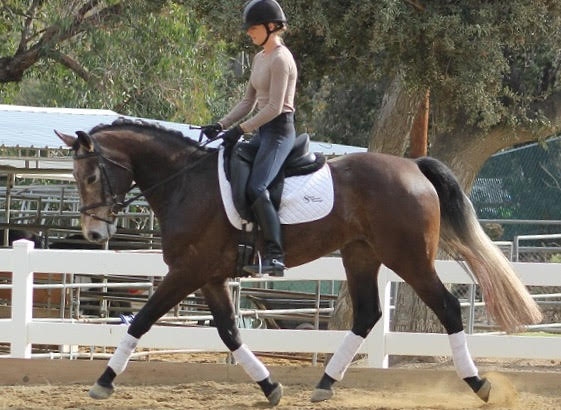 cici - dressage horse sales