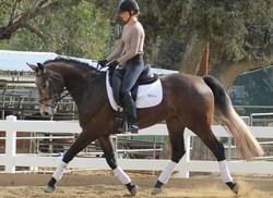 cici - dressage horse sales
