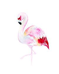 Flamingo for Workshop.jpg