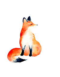 Fox - Image.jpg
