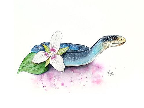 Ontario Fauna with Flora