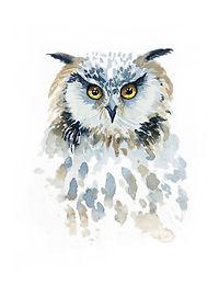 Owl - Workshop - Image.jpg