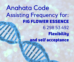 A1 Flower Essence Codes 53 Fig Flower Es