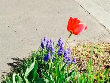 ドンドン花が咲いてきました!!