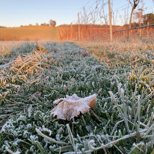 First frost 2020