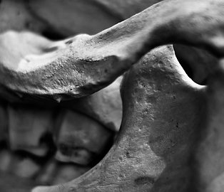 Cantilever Crest (SKULL 03): Archival Anatomical Photo Print in Black and White