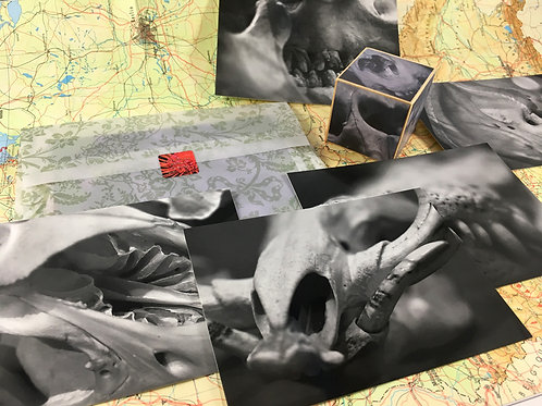 Set of Anatomical Skulls Photo Postcards