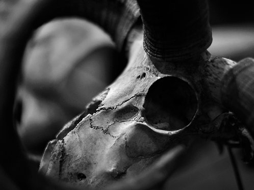 Forbidden Tunnel (SKULL 16): Archival Anatomical Photo Print in Black and White