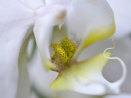 Botanical Photo Print: Cloud City in Creamy Whites and Muted Yellow