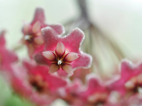 Botanical Photo Print: Petite Bouquet in Pink and Red