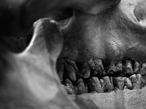 Fremen Sietch (SKULL 18): Archival Anatomical Photo Print in Black and White